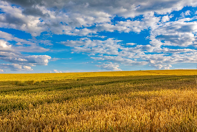 Summer landscape Vysocina Czech Republic