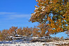 October Snow - Byers, Colorado