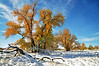 October Snow - Byers, Colorado