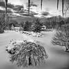 Winter 2010-2011 (38)-Edit-Edit