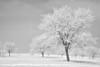 DJRI_copyright_2015-12-23@13-27-35