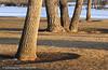 DJRI_copyright_2010-02-15@18-05-15
