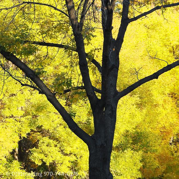 DJRI_copyright_2010-10-20@07-59-41