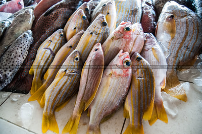 Fresh fish being sold at a local fish market.  This fish will endup on families dinner table in the form of amazing local seafood cuisine.  Location: Lido, Kota Kinabalu, Sabah, Malaysia.