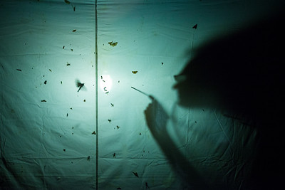 Insect light trapping