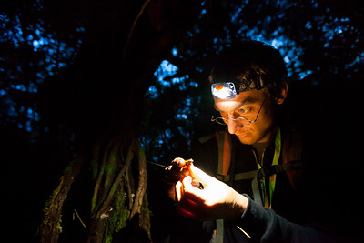 Biologist Merlijn Jocque searches for frogs at night during the 2012 Kinabalu–Crocker Range scientific expedition