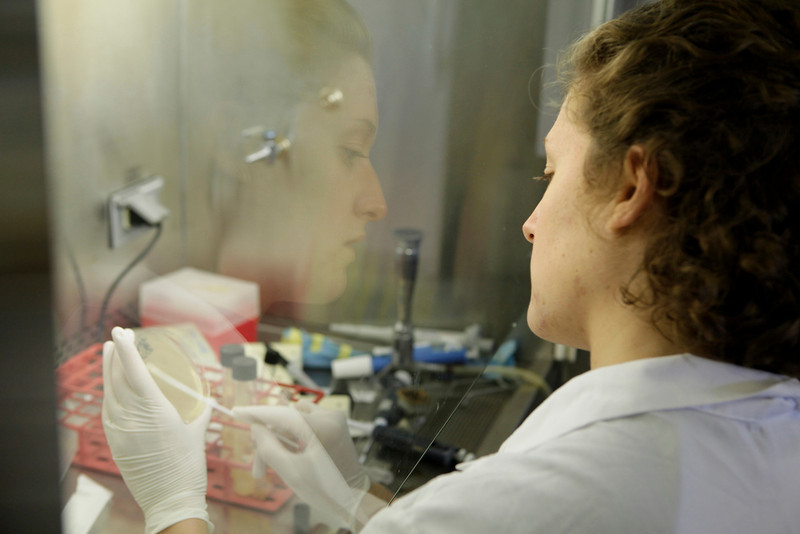ORIGINAL - As part of the Honors  Summer Undergraduate Research Experience, applied and environmental microbiology major Loren Bane looks for ways to waste less of a fish's protein during processing and prevent the bacteria Listeria from living in processed fish. (summer 2010)