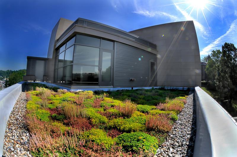 ORIGINAL - 2799-brooks_hall_hdr - Brooks Hall green roof