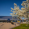 Trees blossom behind the Mountainlair on a sunny spring day, April 2, 2020. Photo: Geoff Coyle