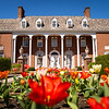 Tulips bloom in front of E. Moore Hall on a spring day in Morgantown, April 2, 2020. Photo: Geoff Coyle