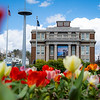 Tulips bloom in front of Oglebay Hall on a spring day at West Virginia University, March 29, 2020. Photo: Geoff Coyle