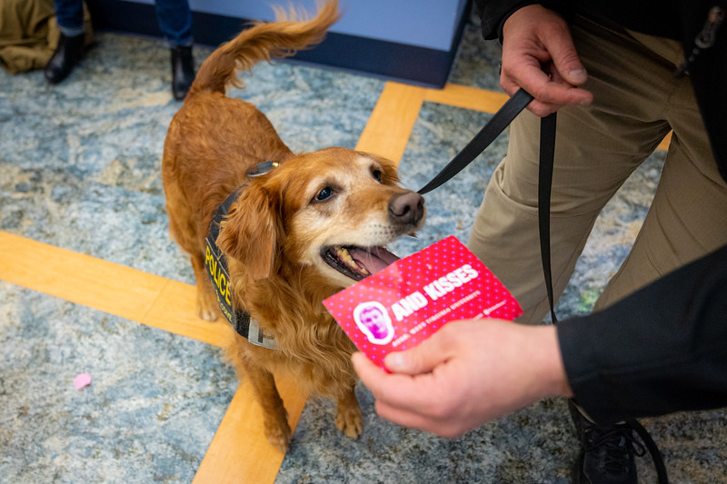 Ginger, the University Police Department's explosives K-9, accepts a valentine from her officer, Feb. 14, 2020. Photo: Geoff Coyle