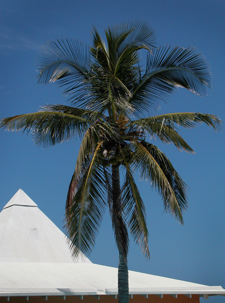 Bermuda Palm and Rooftop