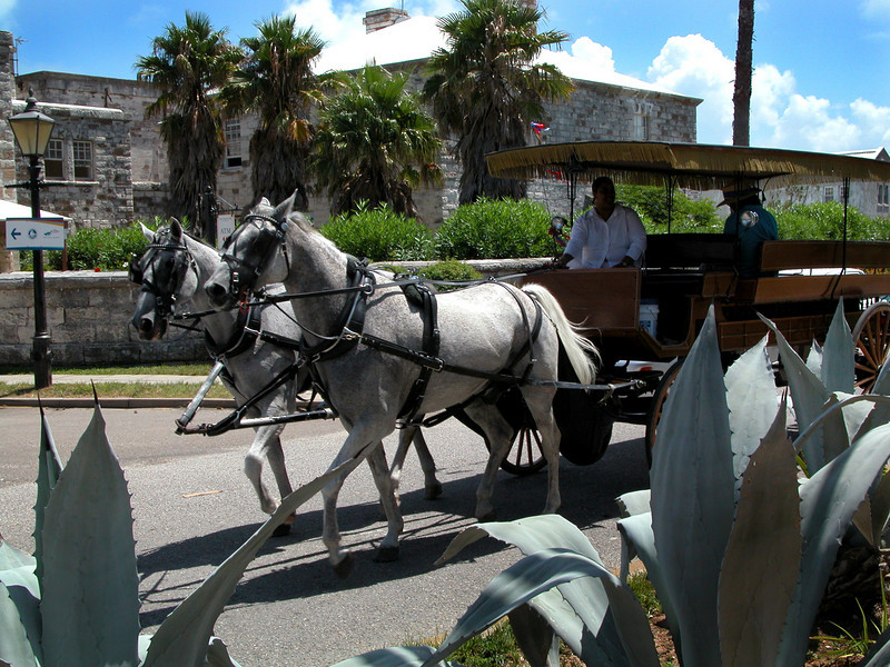 Horse and Buggy Ride Naval Dockyard Bermuda