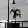 Lamp Post & Palm Silhouette - Key West, FL