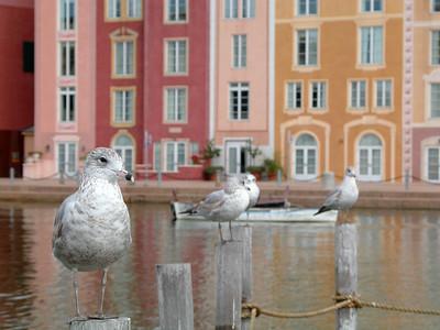 Portafino Bay Hotel gulls 1