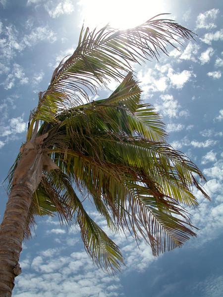 Mexico 2005_08_ palm