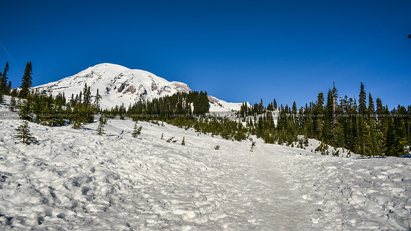Winter and Snow Scenery at Mount Rainier National Park, Paradise, Ashford, Washington, United States.