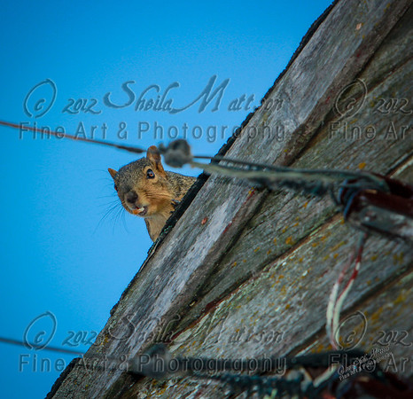 I could have photographed this barn all day long; it was so interesting.  The squirrel, pictured above, didn't really like the intrusion though and let me know it by chattering loudly.  In this picture, he happens to have a piece of corn in his mouth.