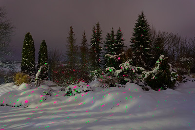 night winter in garden