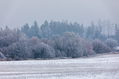 Winter landscape covered with snow