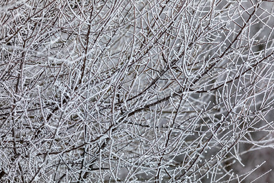 tree with frost. natural background