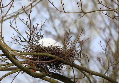bird nest on branch in the winter with snow