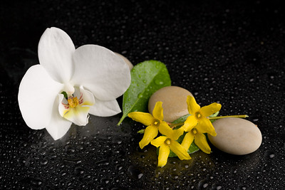 zen stones with orchid flower on black