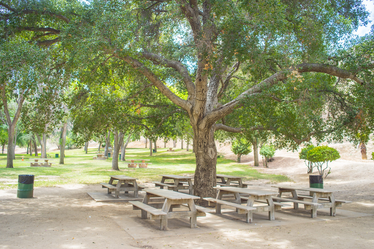 Picnic Table and Park