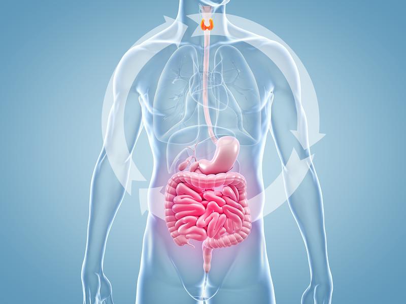 Thyroid Gut Connection