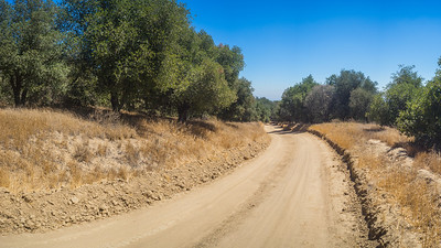 Bend in Dirt Road