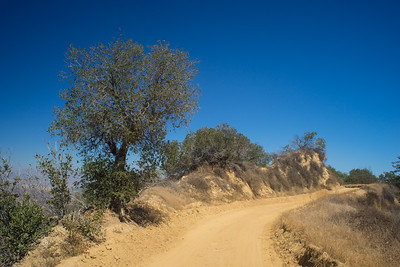 Tree Over Dirt Road