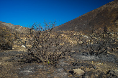Burned Bushes in California Hills