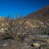 Burned Bushes in California Hills