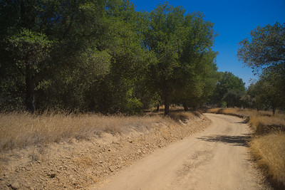Dirt Road in California Woods