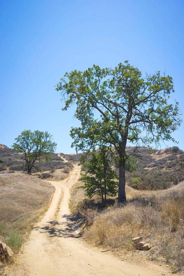California Hill Trails