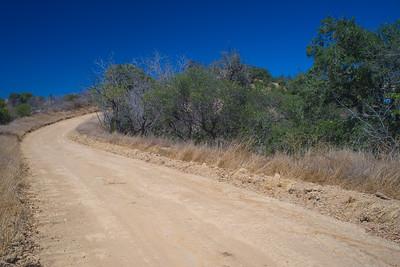 Long Woodland Dirt Road
