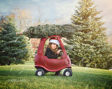 Child Bringing Home Cut Christmas Tree Outside