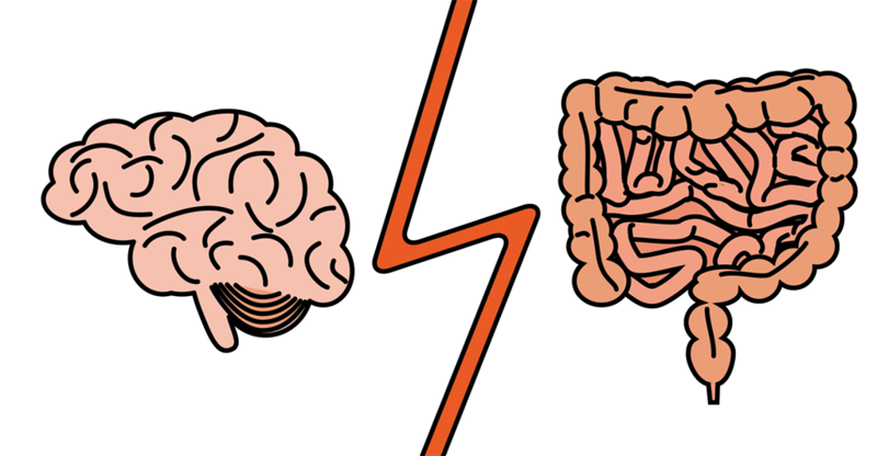 How to Feed Your Brain with Cavin Balaster - AdobeStock 144377643 WEB gut brain L