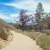 Panorama of Southern California Meadow