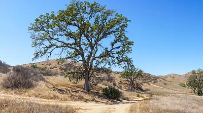 California Hills Panorama