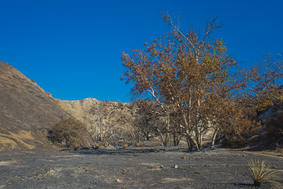 Apocalyptic Burn Area