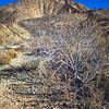 Bush in Rocky Desert