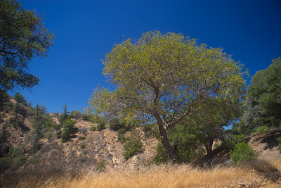 Southern California Wilderness Canyon