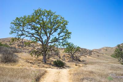 Dusty Trail in California
