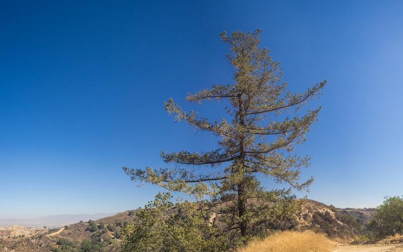 Lone Pine Above California Hills