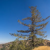Lone Pine Above California Hills