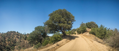 Tree Alongside Dirt Road