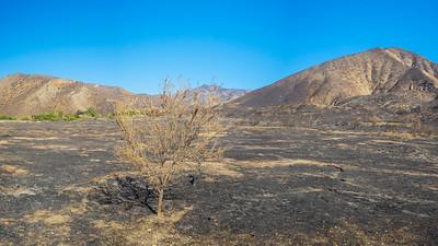 Tree in Burned Savanna