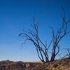 Dead Tree on Ridge